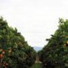 bono-holdings-sunland-farm-13